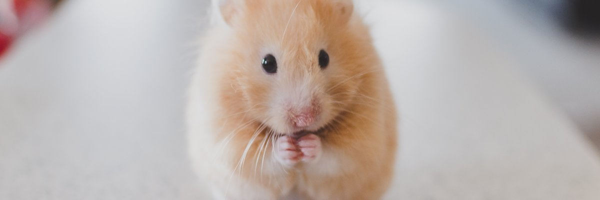GeoHamster